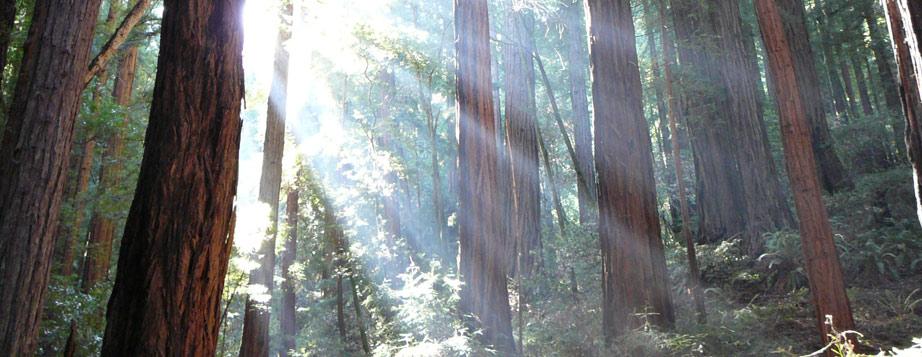 redwoods-bigfoot